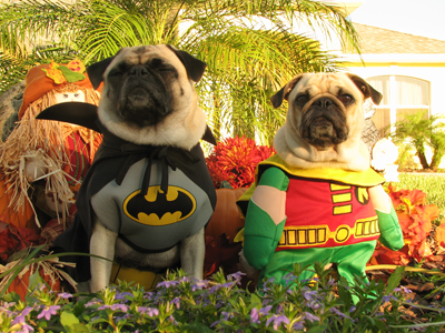 http://www.ownedbypugs.com/images/articles/halloween-contest/batman-robin.png