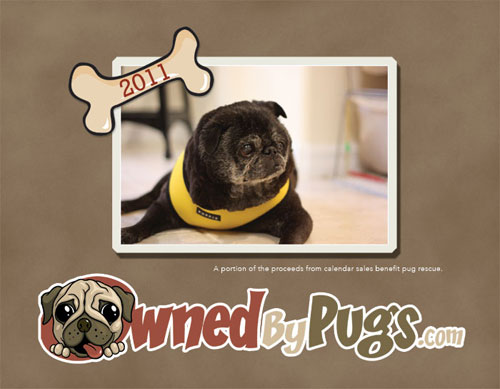 2011 Owned by Pugs Calendar
