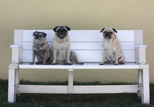 Luna, Henry, Benjamin