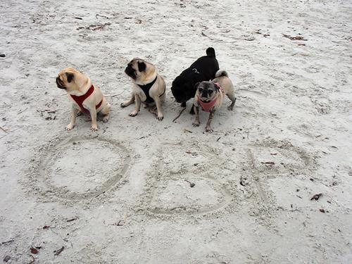 Benjamin, Henry, Sol & Luna