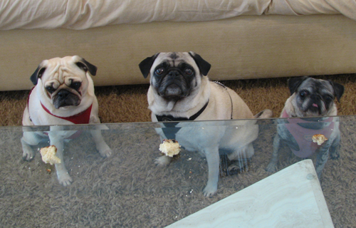 Benjamin, Henry & Luna waiting for a piece of blueberry bread
