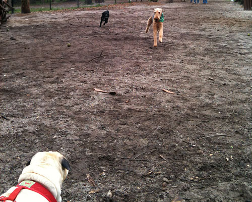 Benjamin at the dog park