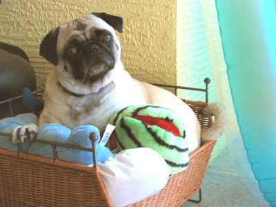 Henry in the toy basket