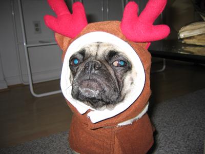 Henry the Reindeer