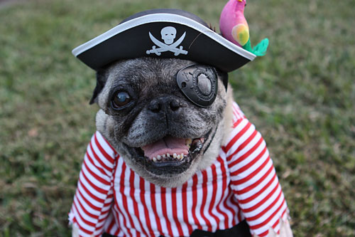and as a extra halloween bonus here is a look back at the pugs halloween costumes over the years - Pugs Halloween Costumes