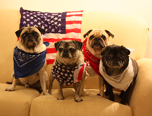 Happy Fourth of July from Benjamin, Henry, Luna & Sol