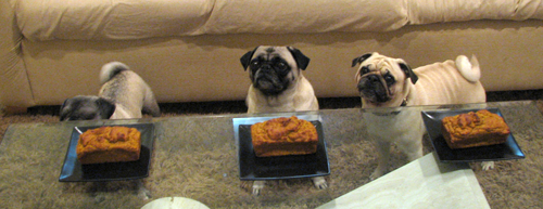 Benjamin, Henry & Luna waiting to eat pugkin bread