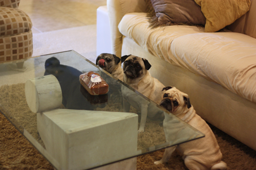 Benjamin, Henry, Luna, Sol & Pugkin Bread