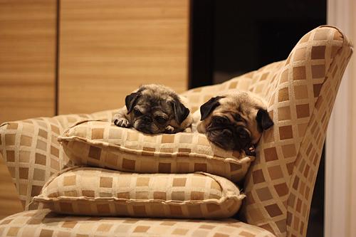 Luna & Henry