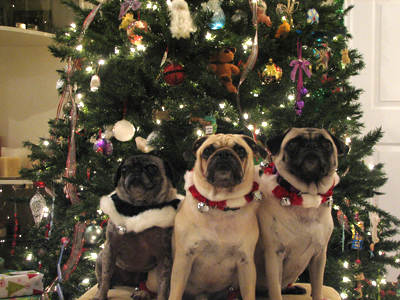Merry Christmas from Benjamin, Henry & Luna