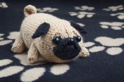 Jolly the Pug