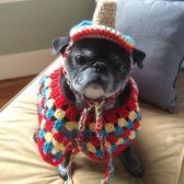 Fiesta Pug