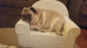 Pug Throne