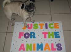 Justice for Animals!