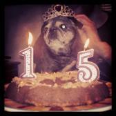 Phoebe's 15th