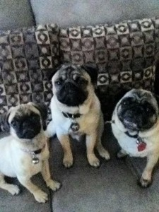 Trixie, Pugsley & Diva
