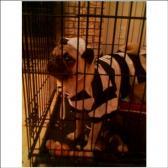 Joey in Jail
