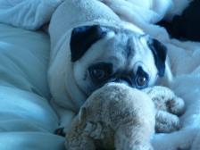 Sophie & her Teddy