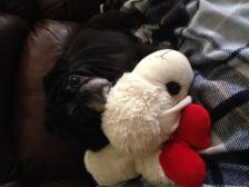 Shiloh and Lambchop