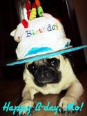 Happy Pugday, Mo!