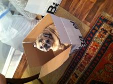 Oliver helping unpack wedding presents