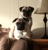 Lilly & Zoe