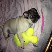 Rocky and his peep