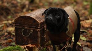 Role Pugging