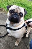Edgar on his walk