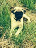 My new baby Izzy