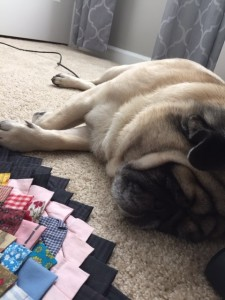 Pug Hard at Work