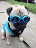 Edgar & his new Doggles