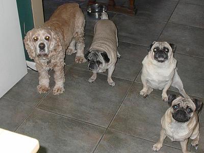 Dizzy, Harley, Jake & Barkly