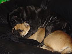 Nelson & Punky cuddling